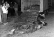 vs23-6-77camion-di-animali-morti